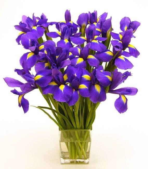 Bouquet iris